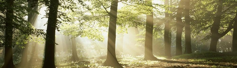 Зазимье – экологически чистое место